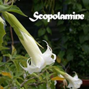 steroid alkaloid glycosides from solanum robustum